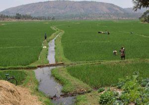 irrigation-iwf